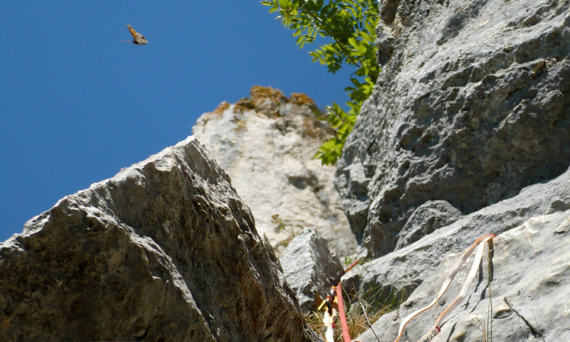 Ape Climbing